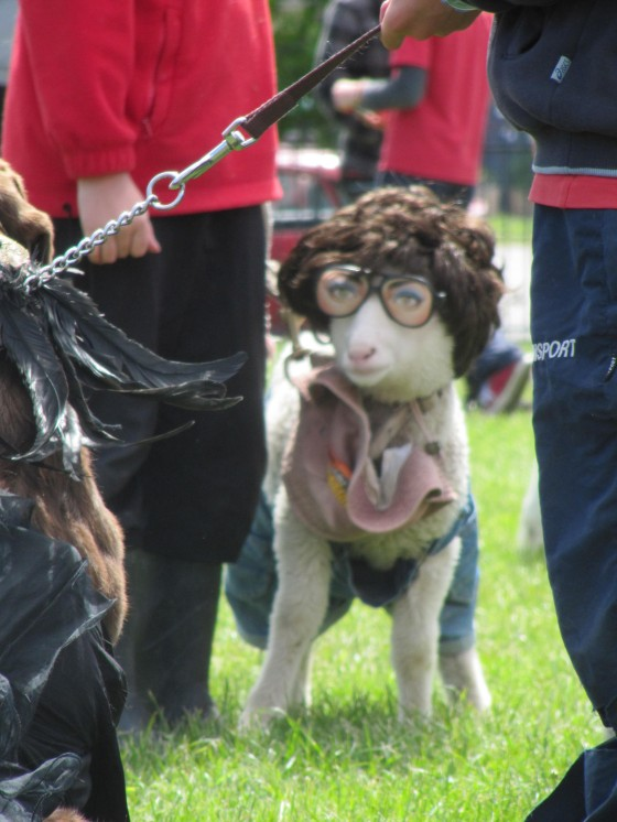 Sheep in funny costume